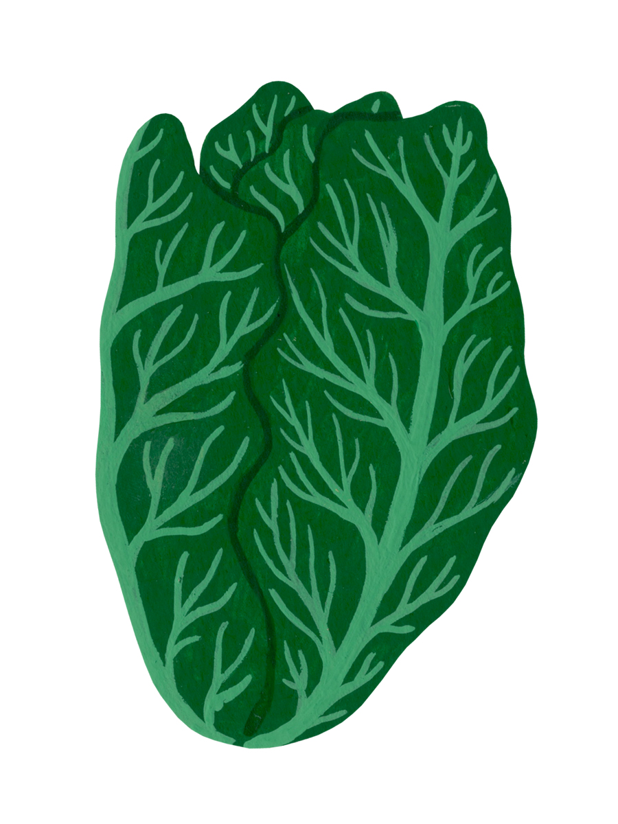 Thumbnail for spring green cabbage
