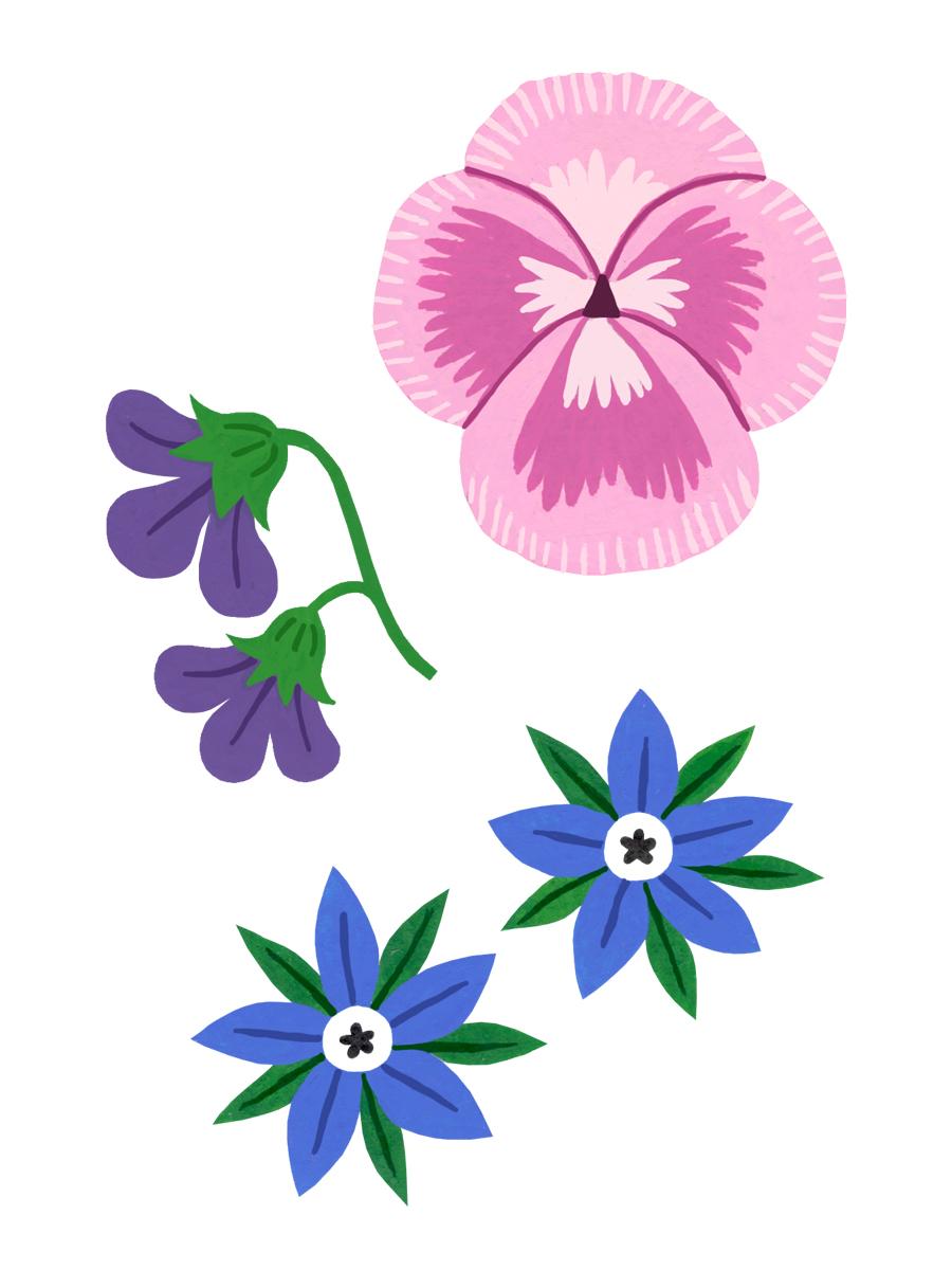 Thumbnail for edible flowers