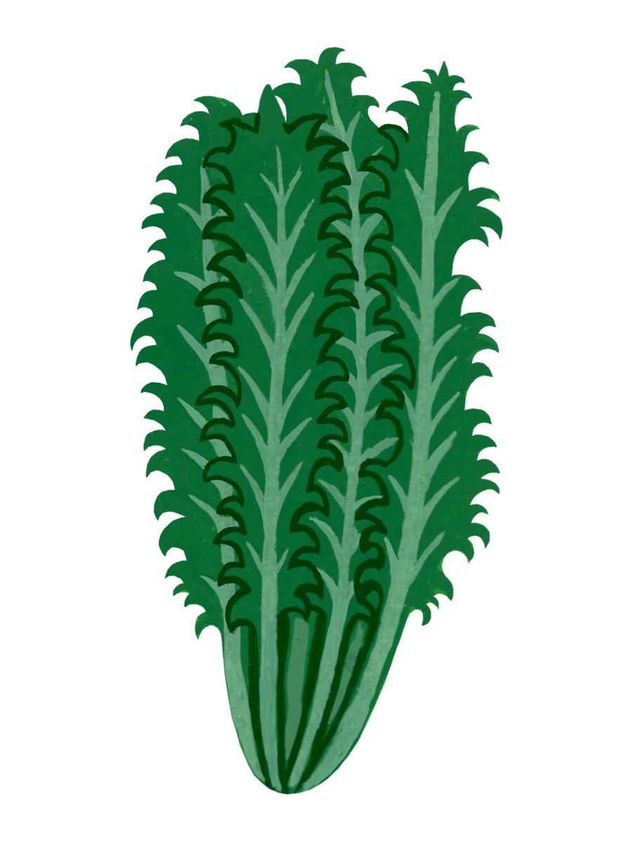 Thumbnail for curly lettuce