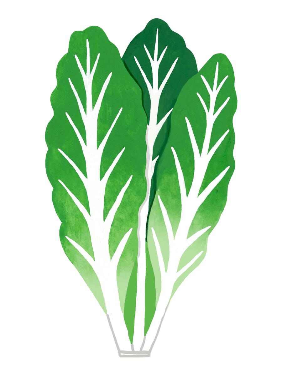 Thumbnail for cos lettuce