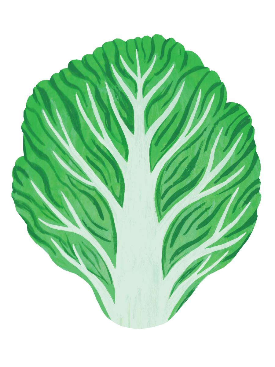 Thumbnail for little gem lettuce